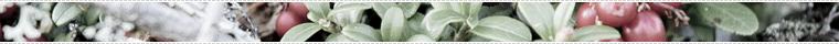MinnApu lingonberry divider